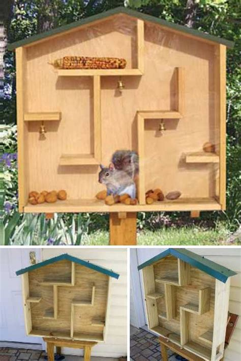 how to hunt squirrels in your backyard nuts to them 8 brilliant backyard squirrel feeders webecoist