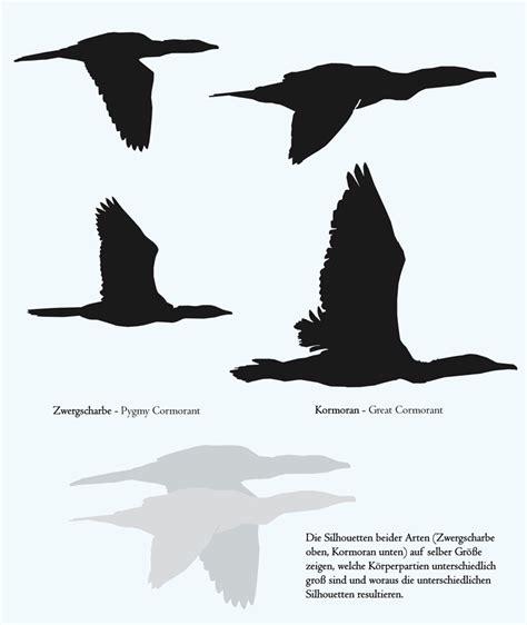vorhänge vögel anmerkungen zur unterscheidung fliegender zwergscharben