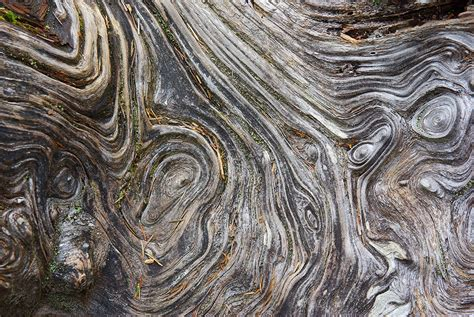 how to photograph texture and detail in nature photography