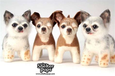 shelterpups stuffed price best 461 national mill rescue images on animals and pets
