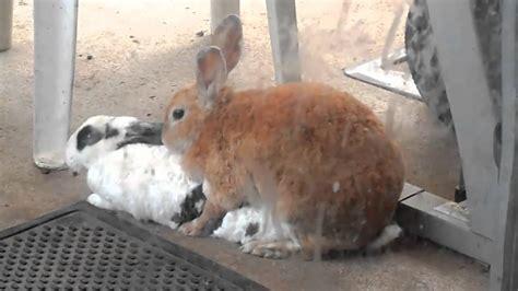animal mating rabbit cat bunny cat mate rabbits mating