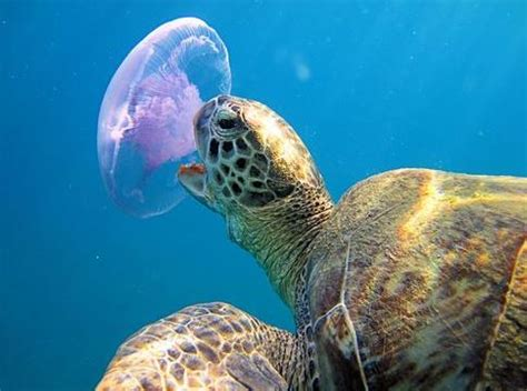 can turtles eat fish food pictures to pin on pinterest pinsdaddy