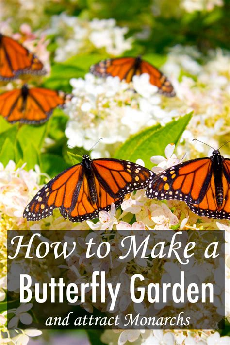 How To Make A Butterfly Garden by How To Make A Butterfly Garden And Other Ways To Help Save