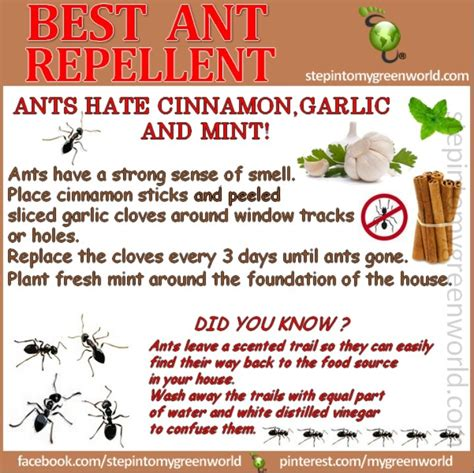 ant repellent non toxic solutions for home health
