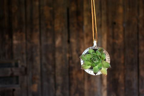 Hanging Flower Planter by Barnacle Pod Succulent Planter Hanging Plant