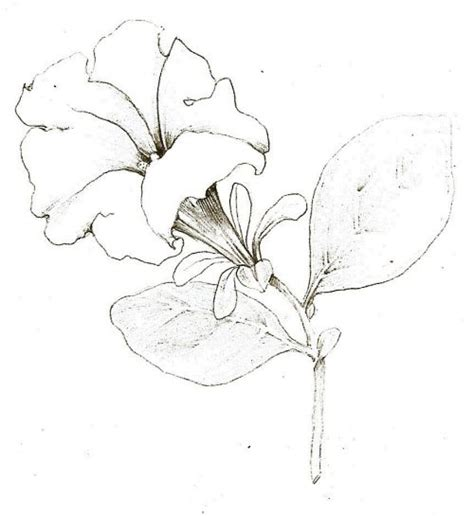 sketchbook tutorial for beginners tutorial botanical drawing with pencil and watercolor