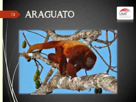 imagenes de animales que comiencen con la letra x animales terrestres que empiezan con la letra a youtube