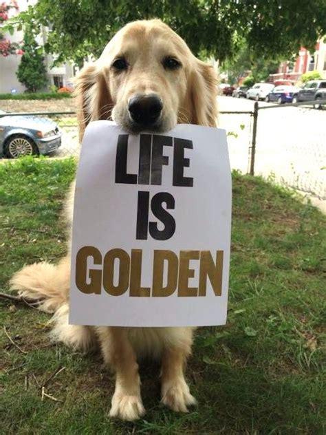 golden retriever quotes 25 best ideas about golden retriever quotes on pet quotes