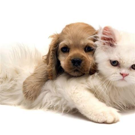 alimentazione gattini 2 mesi crescere sani e forti una guida per cuccioli e gattini