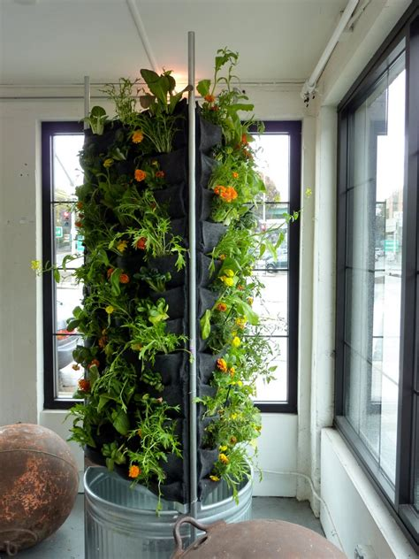 vertical indoor garden vertical aquaponics city dwelling vegetable farming