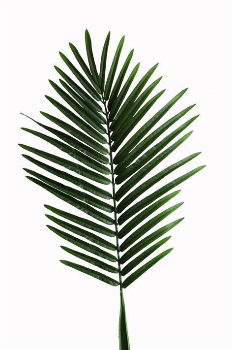 Palm Leaf by Palm Leaf Zoeken Items For Artworks