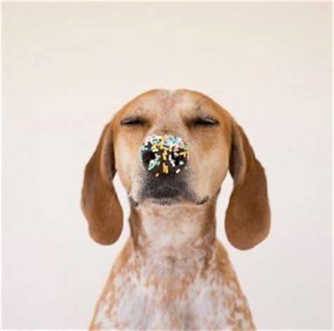 alimenti vietati ai cani gli alimenti vietati ai cani youanimal it