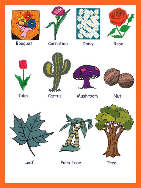 for kindergarteners picture of plants for www pixshark images