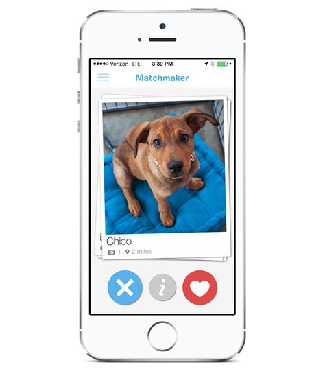 tinder for dogs tinder for dogs new app to find the pooch nbc news