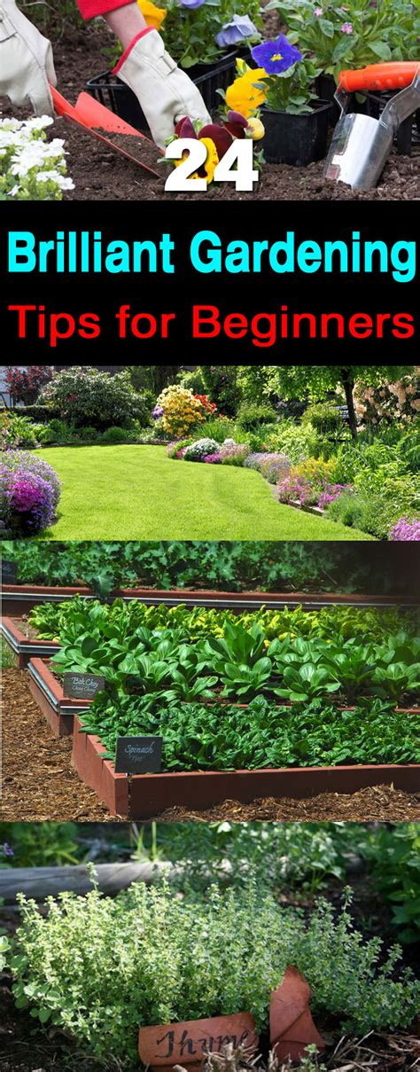 Gardening Ideas For Beginners 24 Gardening Tips For Beginners Balcony Garden Web