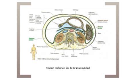 vestibulo de la transcavidad de los epiplones copy of transcavidades de los epiplones by hernan narvaez