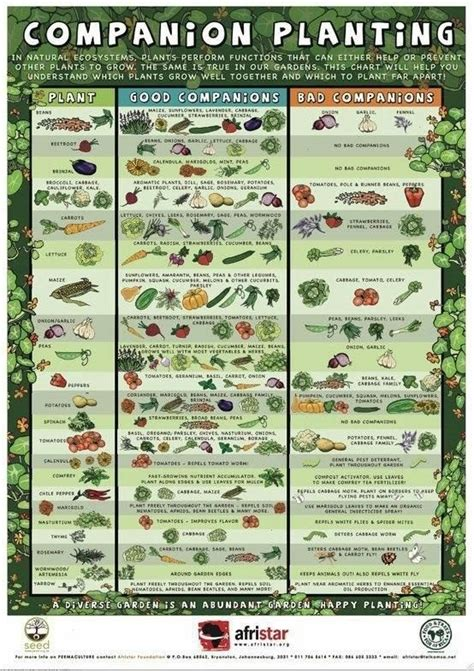 Companion Planting Guide Garden Pinterest When To Start Planting A Vegetable Garden