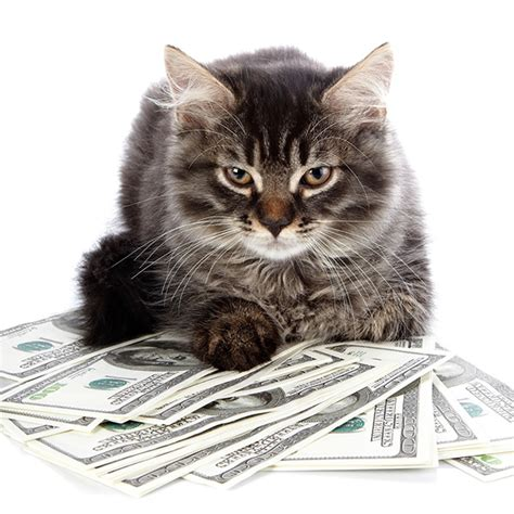 Most Likely Way To Win Money - 5 ways to turn your trash into treasures for cats catster