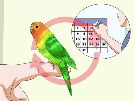 best bird taming part 2 how to your budgies with pictures wikihow