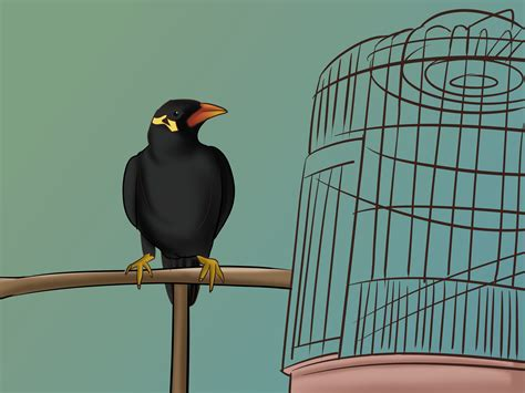 how to raise a mynah bird 4 steps with pictures wikihow