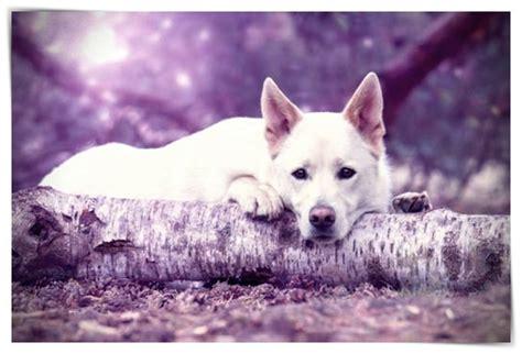 imagenes de burros inteligentes fotos de perros inteligentes dibujo imagenes