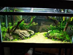 fish tank aquascape designs 1000 images about aquariums on aquarium