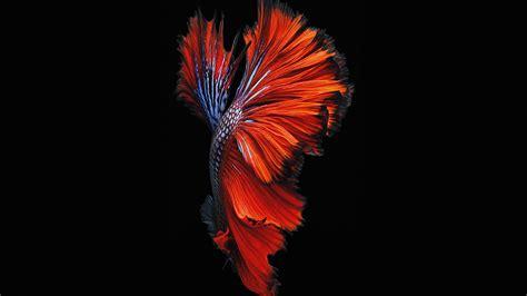 apple ios fish  background dark red papersco