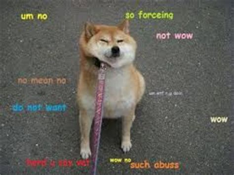 magical doge google search doge  life funny