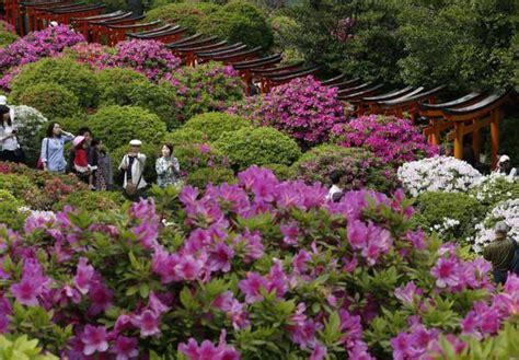 giardini in fiore foto tokyo giardini in fiore nel santuario nezu primopiano