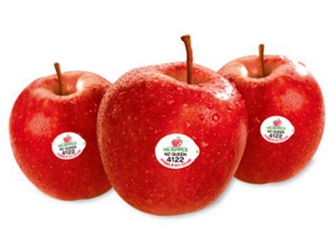 apple queen apple queen new zealand nashik first online exotic