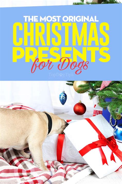 15 most original christmas presents for dogs and their