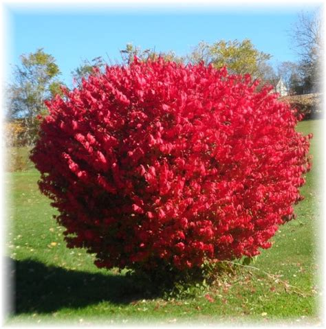 lessons from the burning bush daily encouragement