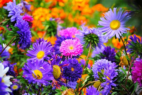 summer flowers the most popular blooms for every month most popular summer garden plants articlecube