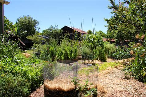 backyard farms your urban home garden can grow more food than imagined
