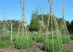 Green Bean Trellis Height Google Image Result For Http Fresh Basil Com Wp Content