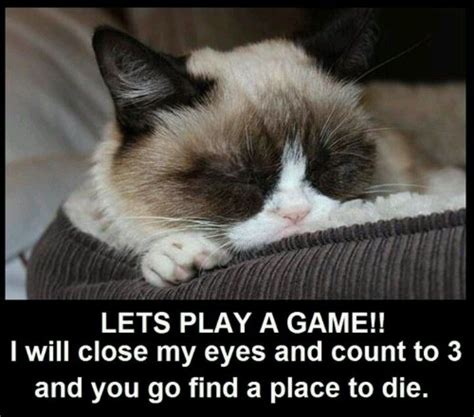Grumpy Cat Sleep Meme - 219 best grumpy cat rocks images on pinterest cats