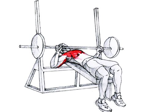 bench press bar to chest personal trainer weight training bhasinsoft