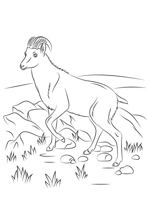 realistic goat coloring page realistic goat coloring page free printable goat coloring