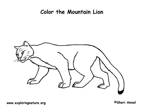 mountain lion coloring pages realistic coloring pages