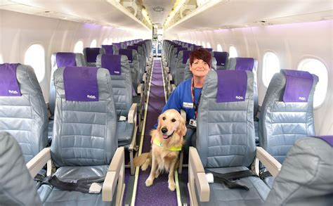 dogs will fly in the cabin on delta planes just like all
