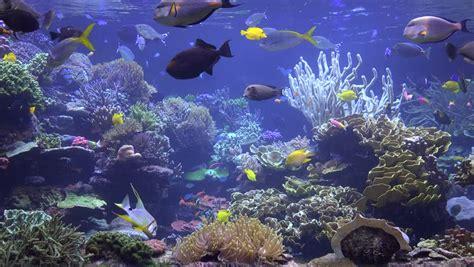 4k wallpaper open your eyes fish aquarium 4k fish aquarium ultra hd 4k wallpapers