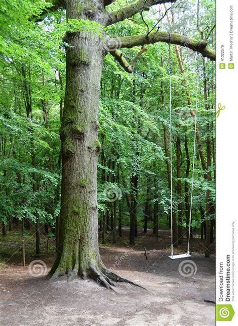 woodland tree woodland tree swing stock photo image 41322579