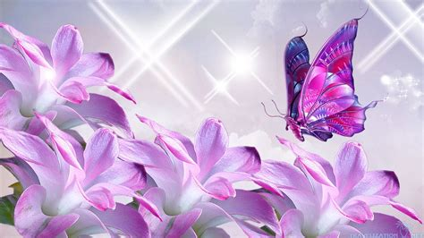 purple flower clipart butterfly wallpaper pencil and in