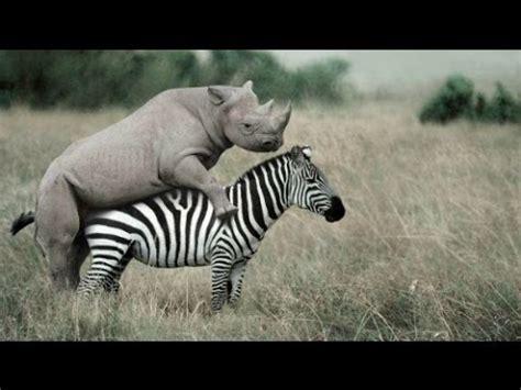 Imagenes De Xeso Animal   documental sexo animal extrano documental y e g youtube
