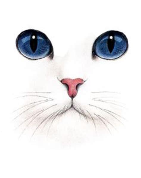 doodlebug konusu 25 best ideas about cat drawing on cat