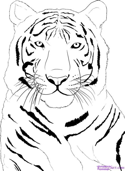 angry tiger face tattoo sketch photo 1 real photo