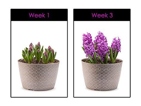 indoor herb garden uv light hoont led grow light indoor plant flowers and herb