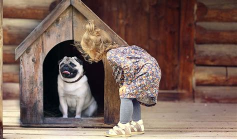 to be in the dog house how to stop dog from pooping in house or dog crates explained