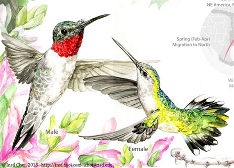the life cycle of hummingbirds on behance