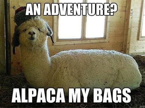 alpaca puns funny